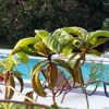 villa-boukamvilia-swimming-pool